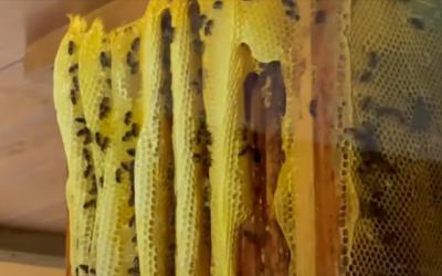 Visita al Museo de la miel de Sigüenza