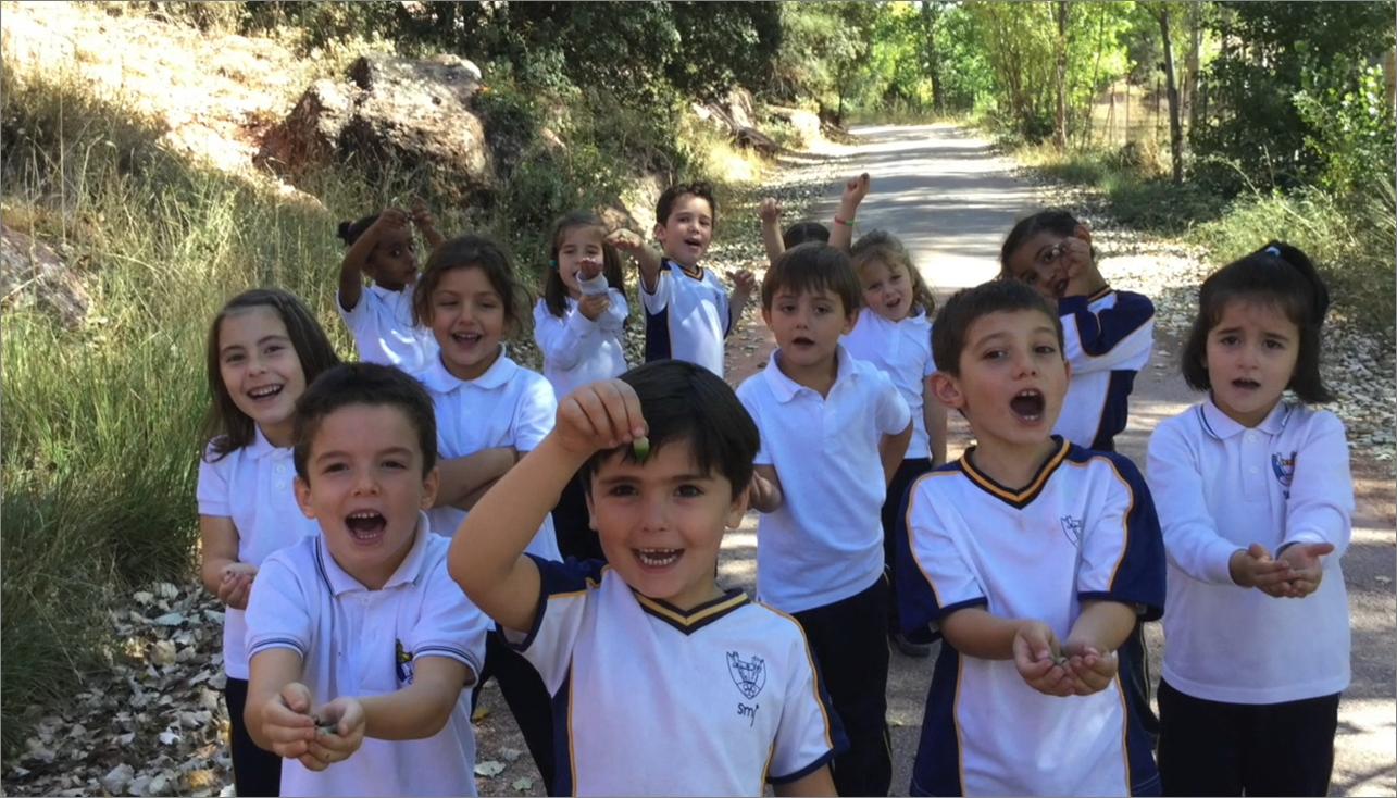 educación primaria colegio safa sigüenza