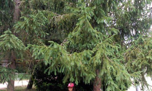 Taller de Botánica en El Oasis